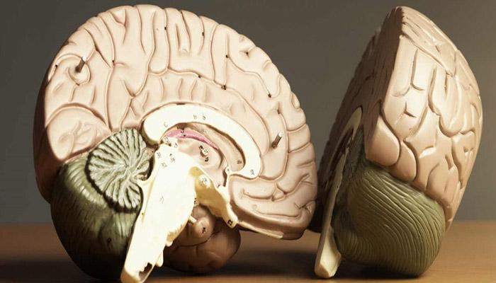 दिमागी जैकब रोग खतरनाक-Hindi News