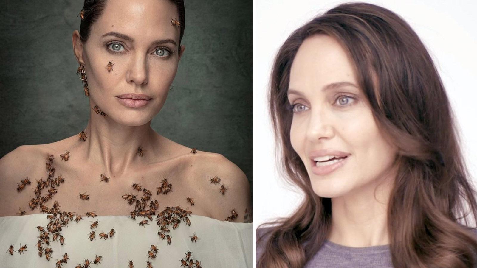 Angelina Jolie 60 हजार खतरनाक मधुमक्खियों में 18 मिनट तक कैसे रहीं, फोटोशूट के लिए क्या किया-Hindi News