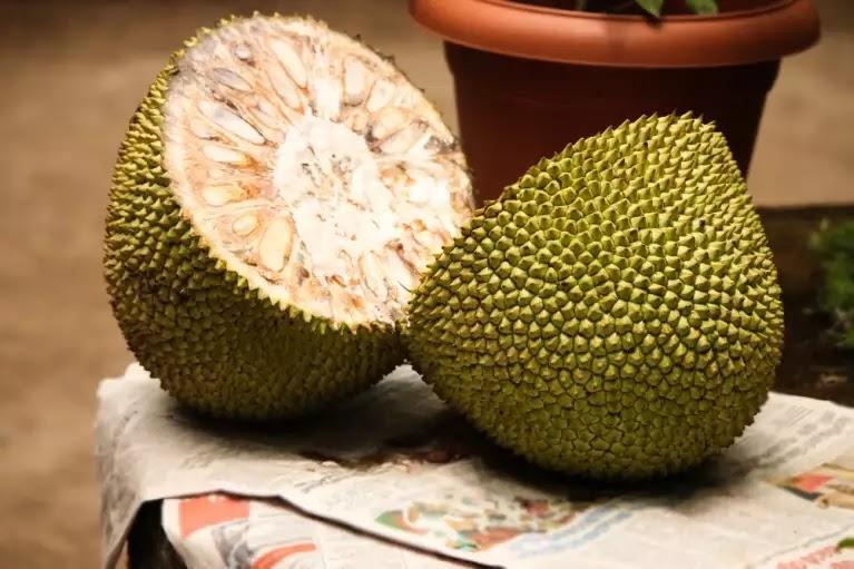 शरीर में इम्युनिटी बढ़ाने के लिए खाना शुरू करें कटहल, Corona नहीं आएगा पास-Hindi News