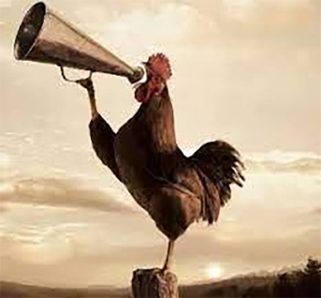 अजब गजब : 'कुकड़ू कू' से परेशान होकर मुर्गे की तोडी टांग, मालकिन को पता चलने पर FIR दर्ज-Hindi News